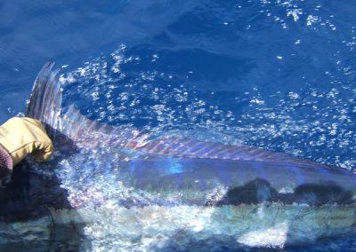 florida-marlin-1