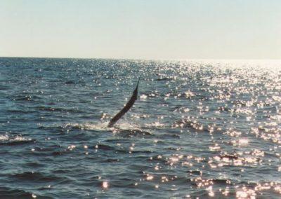 sailfishaway_jpg-1